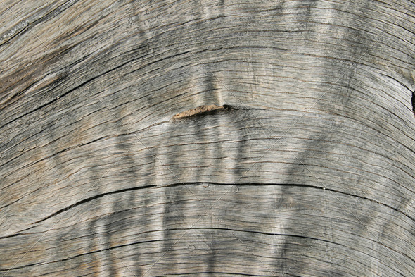 PhotoDune curved woodgrain detail 3883701