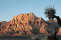 Mount Wilson and Joshua tree - PhotoDune Item for Sale