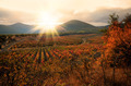 Sunset over a vineyard in the fall season Crimea  Ukraine - PhotoDune Item for Sale