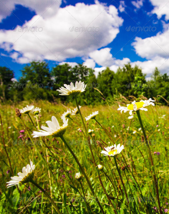Meadow and blue sky - Stock Photo - Images