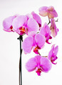 Beautiful purple orchid flowers - PhotoDune Item for Sale