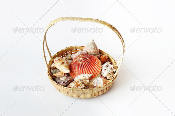 PhotoDune Beautifull sea shells in cart 3814764