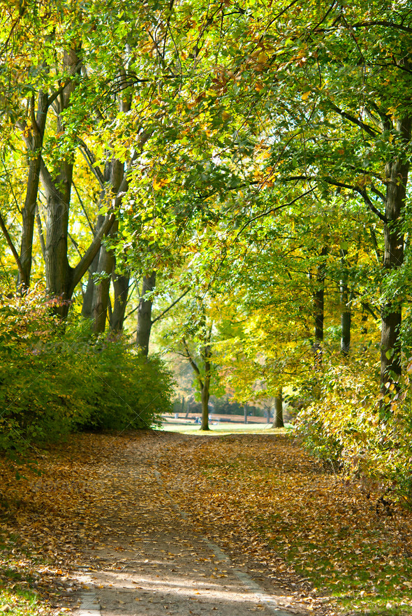 Autumnal Park - Stock Photo - Images