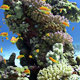 Colorful Fish On Vibrant Coral Reef, Static Scene 4 - VideoHive Item for Sale
