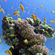 Colorful Fish On Vibrant Coral Reef, Static Scene 5 - VideoHive Item for Sale