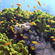 Colorful Fish On Vibrant Coral Reef, Static Scene 6 - VideoHive Item for Sale