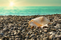 Shell on beach with tide at  background - PhotoDune Item for Sale