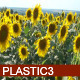 Sunflowers HD - VideoHive Item for Sale