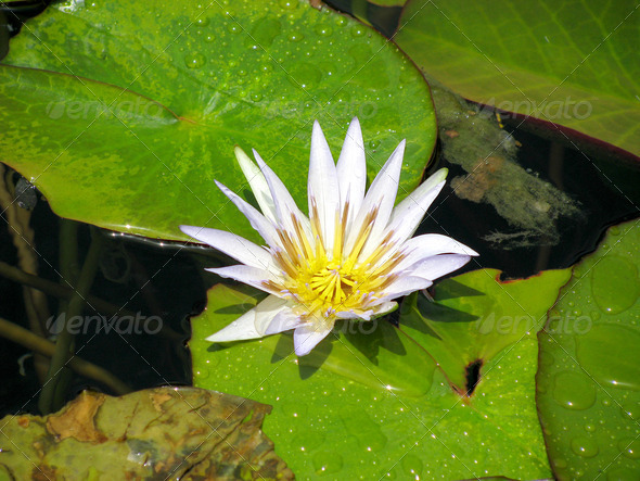 PhotoDune Lotus in Museum Egyptian 3826756