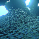 Huge Shoal Fish on Coral Reef - VideoHive Item for Sale