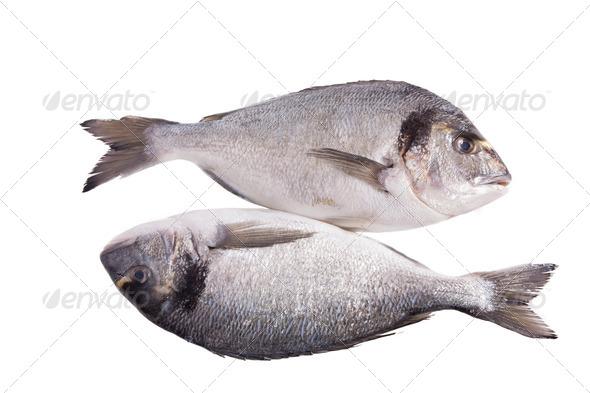 PhotoDune Two dorado fish isolated on white 3854183