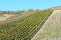 Wine Field - PhotoDune Item for Sale