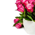 pink roses - PhotoDune Item for Sale