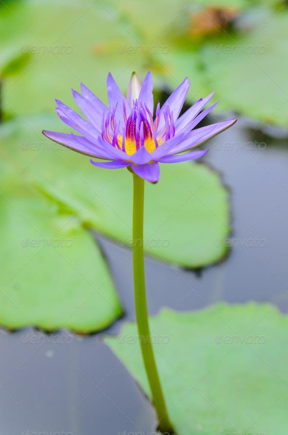PhotoDune floral 3867169