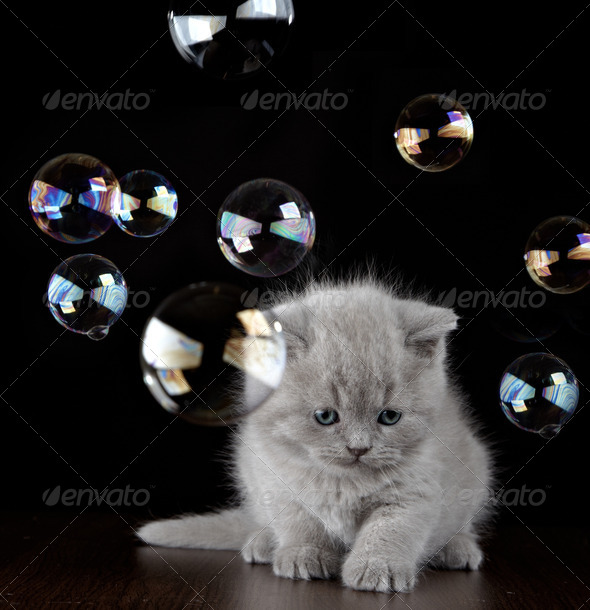 PhotoDune kitten and soap bubbles 3891201
