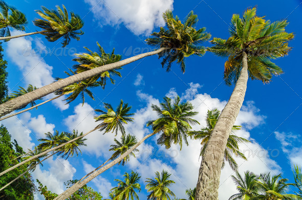 PhotoDune Palm Trees and Sky 3895792