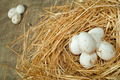 Organic domestic white eggs in straw nest - PhotoDune Item for Sale