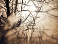 Frozen trees in sunlight - PhotoDune Item for Sale