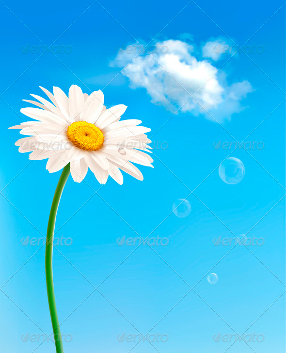 GraphicRiver Beautiful White Daisy in Front of the Blue Sky 3910843