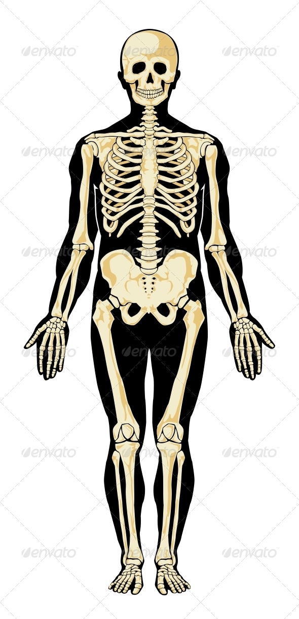 GraphicRiver Human Skeleton 3917820