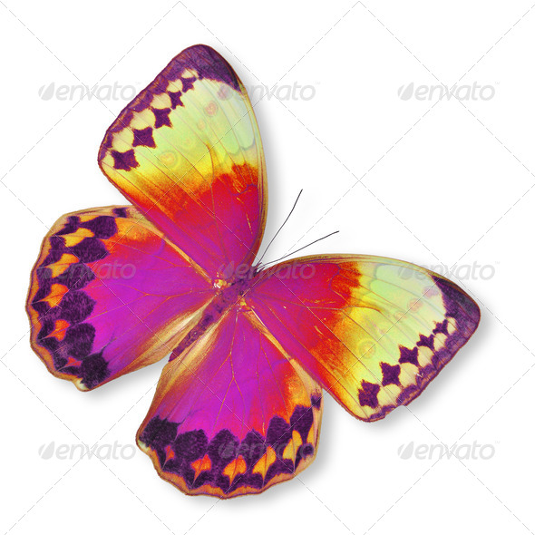 PhotoDune colorful butterfly 3919990