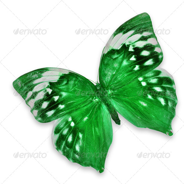 PhotoDune Green butterfly 3920003