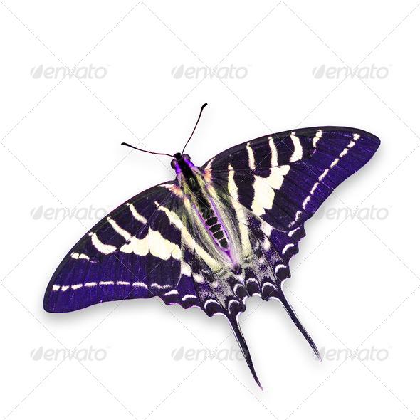 PhotoDune Purple butterfly 3920007