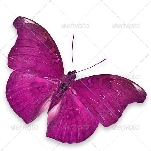 PhotoDune Pink butterfly 3920009