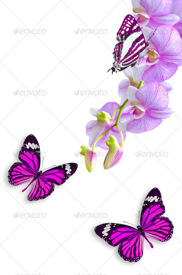 PhotoDune flowers and butterflies 3920015