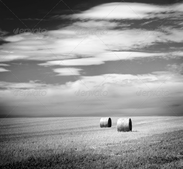 Hay Bales Black and White - Stock Photo - Images