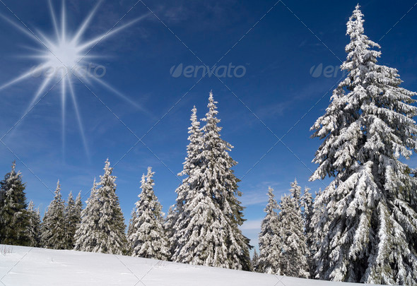 Winter landscape - Stock Photo - Images
