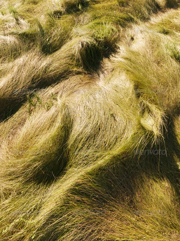 Wavy grass - PhotoDune Item for Sale