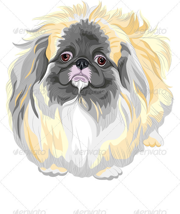 vector Pedigreed Dog Sable Pekingese Breed  - Animals Characters