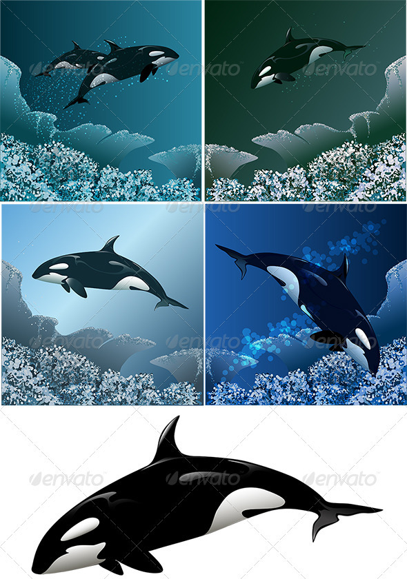 GraphicRiver Killer Whale Set 3952404