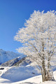tree covered with snow front of mountain - PhotoDune Item for Sale