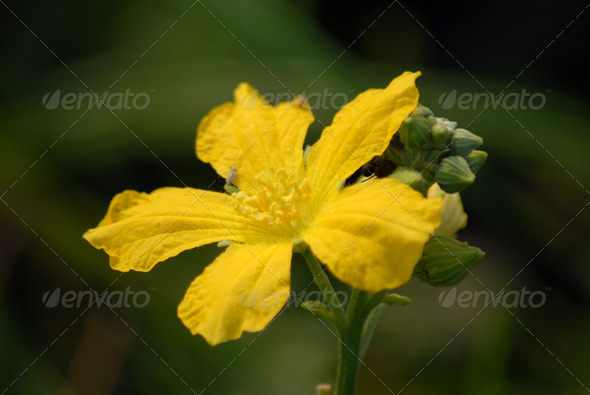 PhotoDune yellow flower 3987233