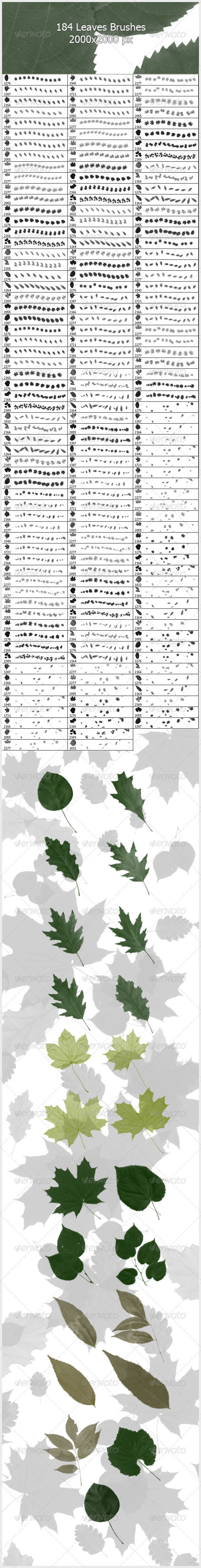 184 Leaves Brushes ( 2000px ) - Flourishes Brushes