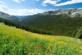 Mountain Wildflower Landscape - PhotoDune Item for Sale