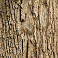Tree Bark Background Texture - PhotoDune Item for Sale