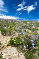 Colorado Flowers Mountain Landscape in Summer - PhotoDune Item for Sale
