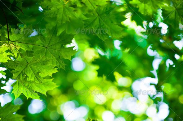 PhotoDune green leaves 3984318