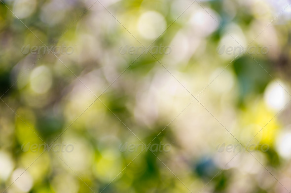 PhotoDune Nature green abstract 3984316