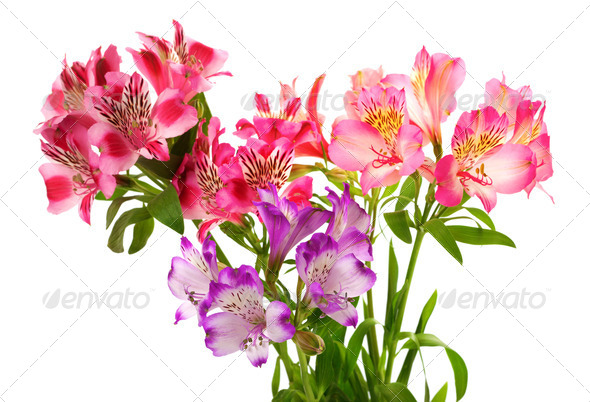 Bouquet of lilies (alstroemeria) - Stock Photo - Images