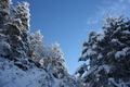 Winter Panorama, Mountains and Forest - PhotoDune Item for Sale