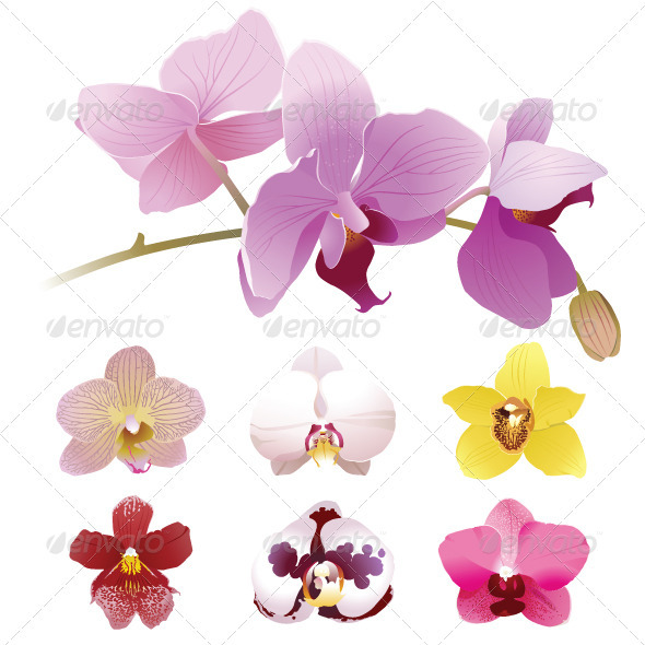 GraphicRiver Orchids Flowers 4008777