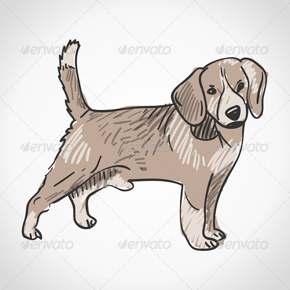 GraphicRiver Beagle Dog 4011201