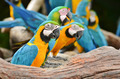 Colorful Macaws in the nature - PhotoDune Item for Sale