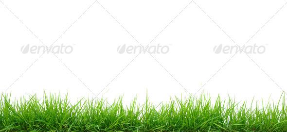 PhotoDune Grass 4019075