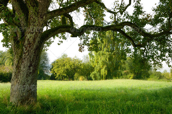 Serene landscape bordered by a tree