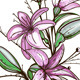 Lily Flowers Illustration - GraphicRiver Item for Sale